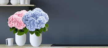code-promo-monceau-fleurs